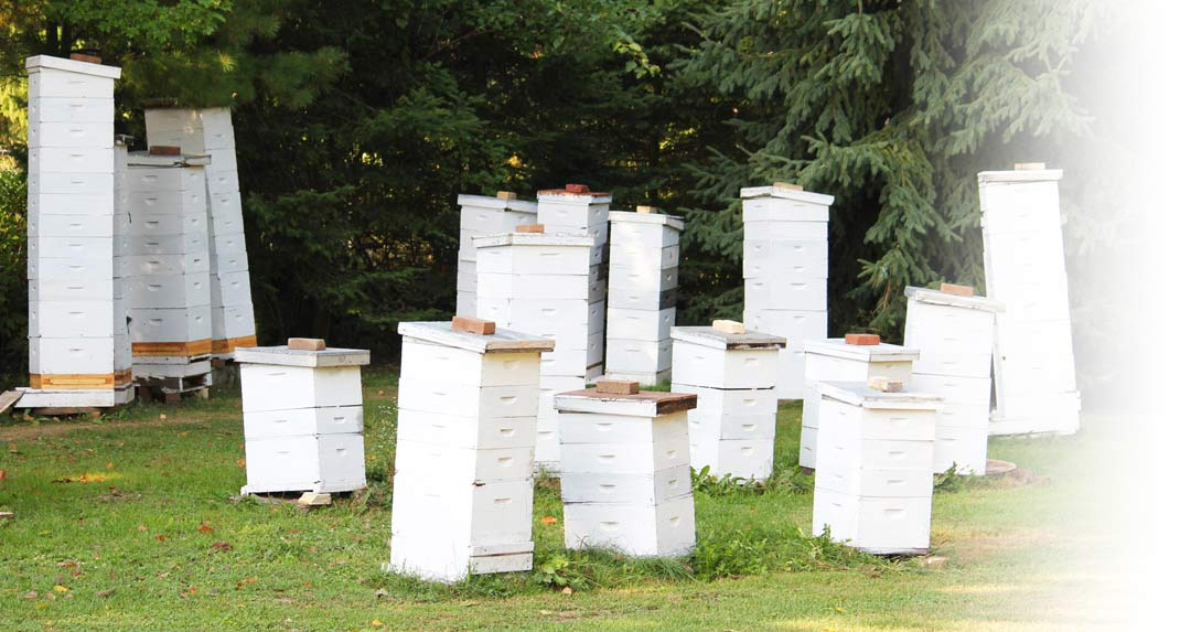 our-honey-beehive-boxes-bg